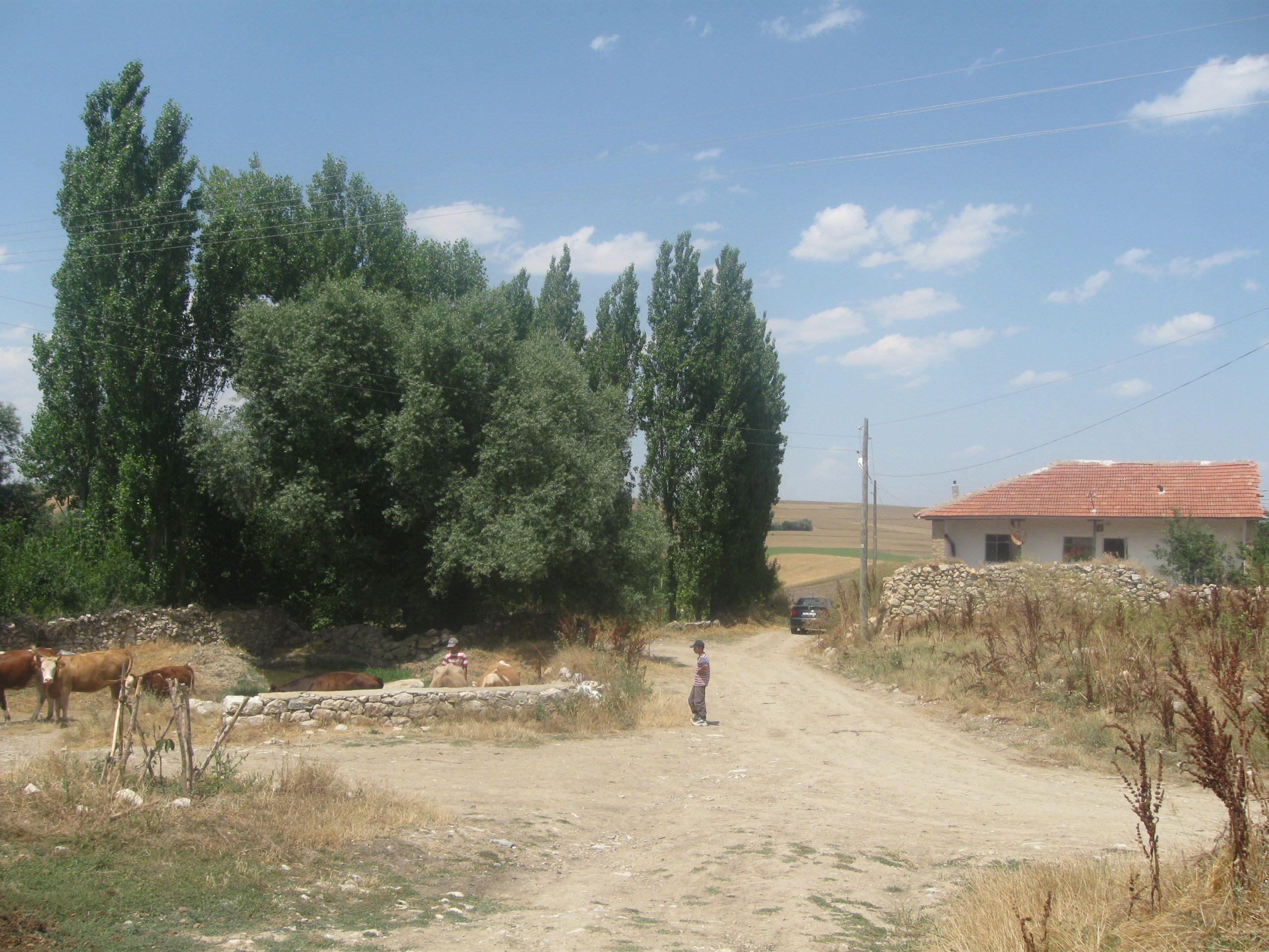 2011 temmuz (5)
